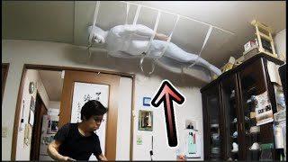 天井にいたらどのくらいでバレるの?【恐怖】
