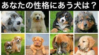【心理テスト】あなたの性格にピッタリな犬はこれ!深層心理から相性のいい犬をみつけるテスト