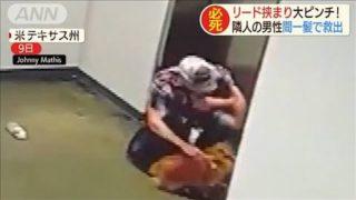 エレベーターにリード挟まり大ピンチ 犬の結末は・・・(19/12/12)
